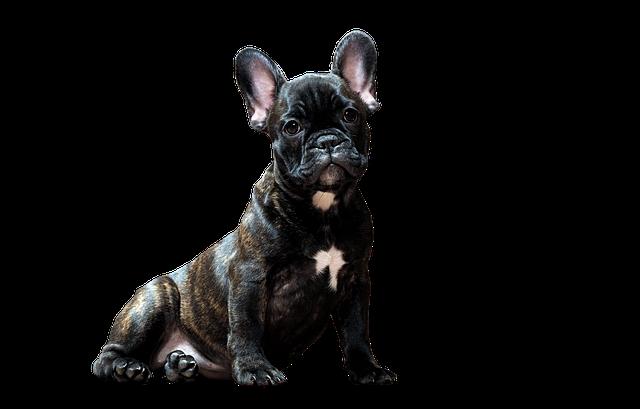 dog-2975557_640